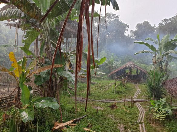 Ekspedicija į Papuą salą. Imk mano dukrą į žmonas už 4 kiaules